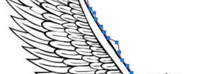 CAD怎么用曲线工具绘制荷花图案?